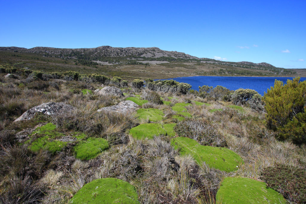 Alpine vegetation at Lake Mackenzie, January 2011.