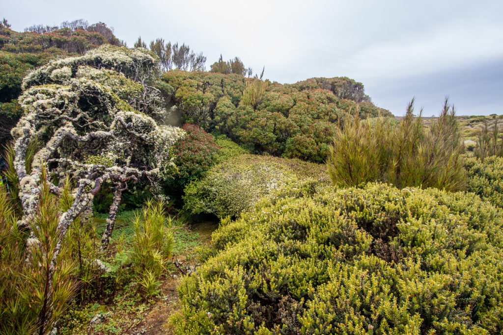 Transition from scrub to elfin forest in a relatively sheltered location on Enderby Island.